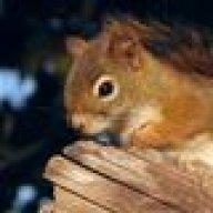 curlysquirrel