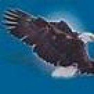 eagle_789