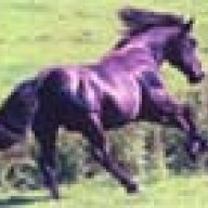 caballoschica